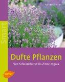 """Buch """"Dufte Pflanzen"""" von Natalie Faßmann - bei amazon entdeckt"""